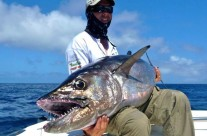 Dogtooth Tuna Fishing using FAD