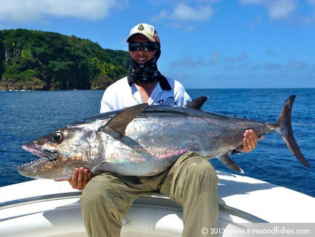 dogtooth tuna or white tuna trees and fishes